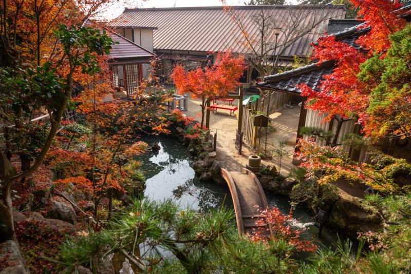 白雲大社のもみじ祭り(令和2年11月14日) ~  紅葉スポットの参道を巡りながら、秋を撮り和にひたる
