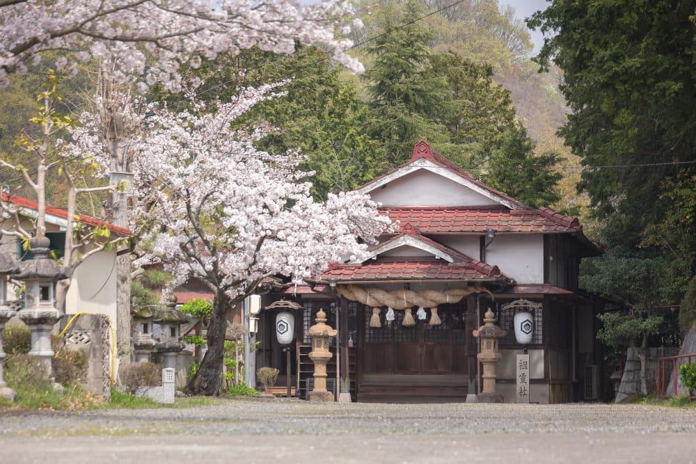 白雲大社駐車場の桜