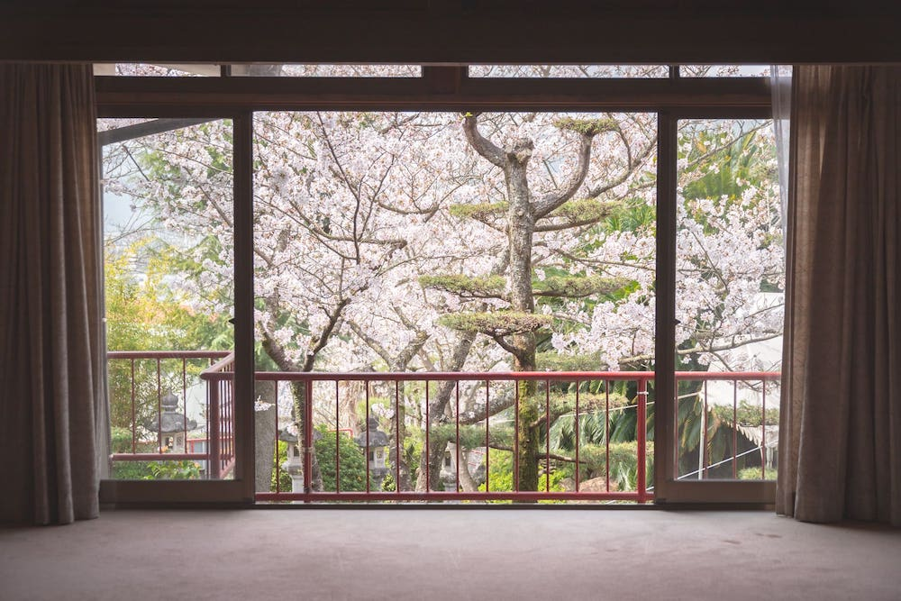 白雲大社会館から見た桜