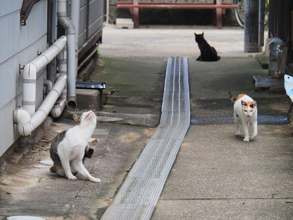 真鍋島の猫